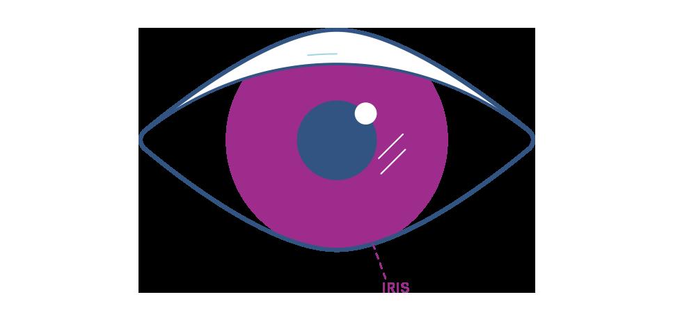 ม่านตา
